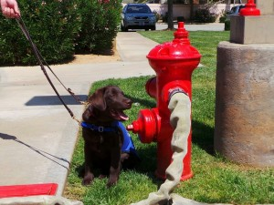 FMM fire hose attached to City of Banning hydrant